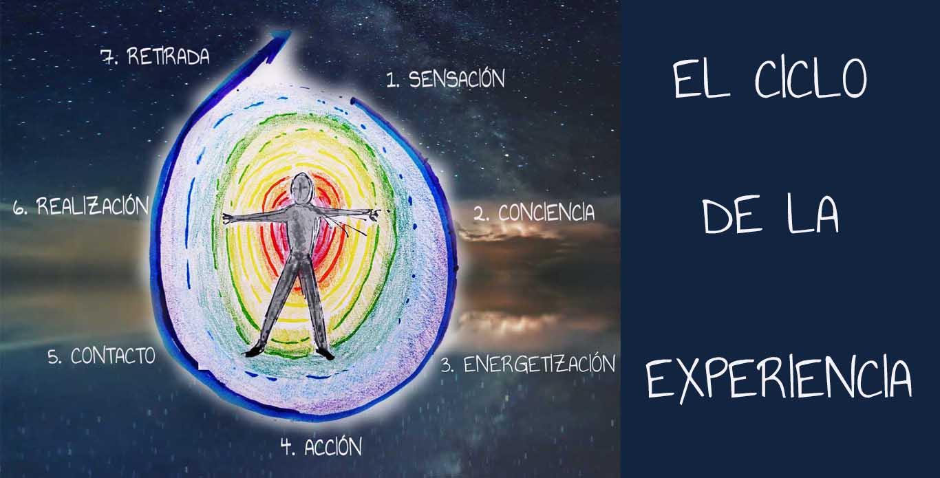 ciclo de la experiencia